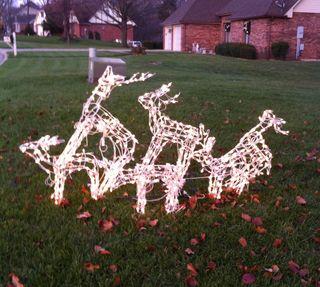 X Deer